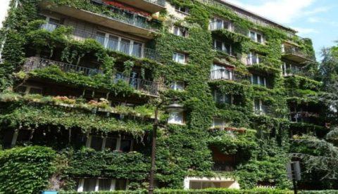 végétalisation façade