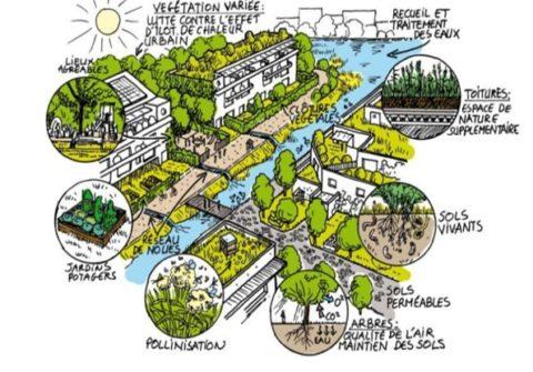 biodiversité urbaine